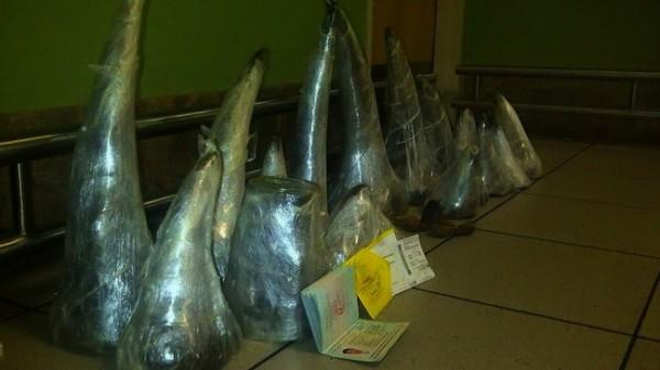 Photo AFP Cornes de Rhinos