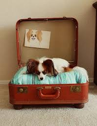 Chien Valise